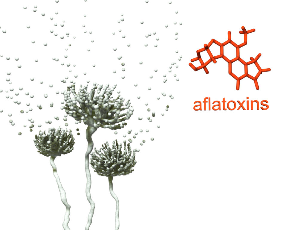 Mold and aflatoxin